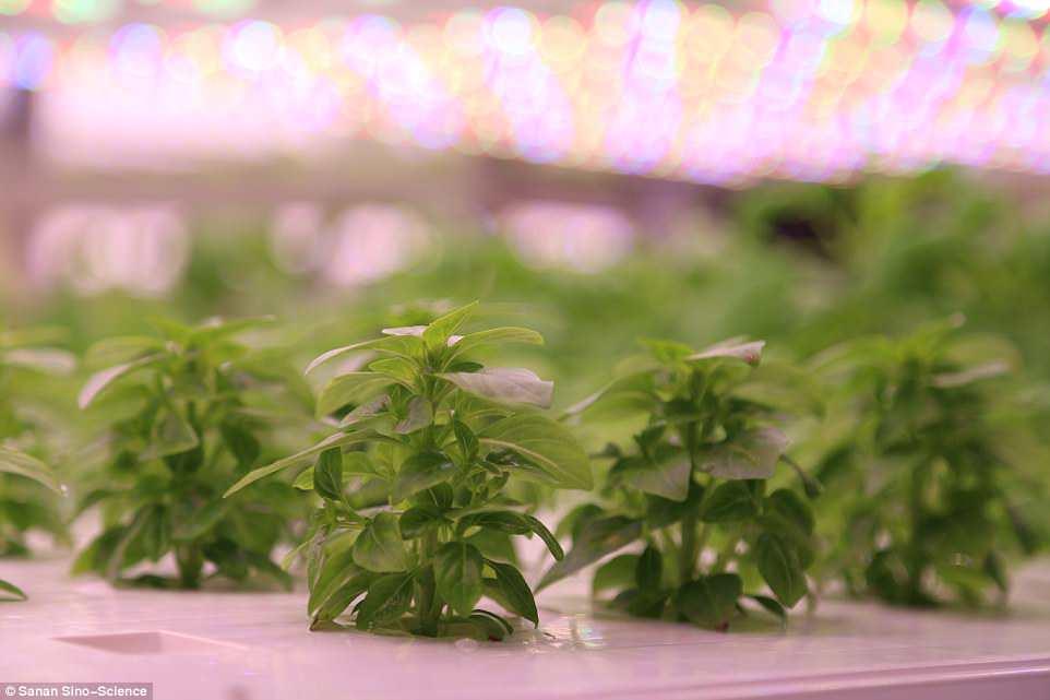 teknologi pertanian cina