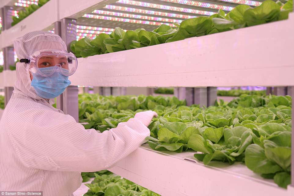 Teknologi Agrikultur