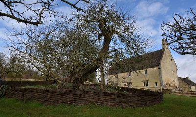 Teori Gravitasi Newton dan Pohon Apel